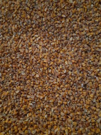Kukurydza sucha  na pasze