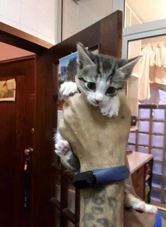 Gatinhos para adotar