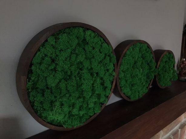 Chrobotek Mech obraz. Drewniana rama malowana o śr. 30cm