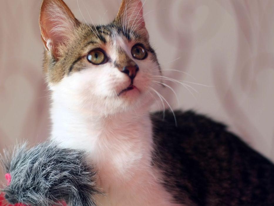 Котик котенок в добрые руки Киев - изображение 1