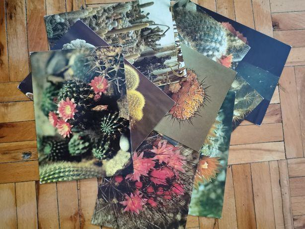 Kolekcja pocztówek Kaktusy