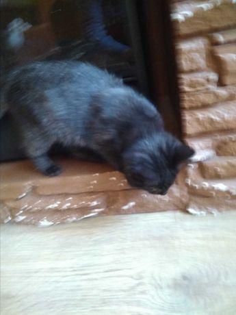 Слепая кошечка Молли  очень нуждается в доме