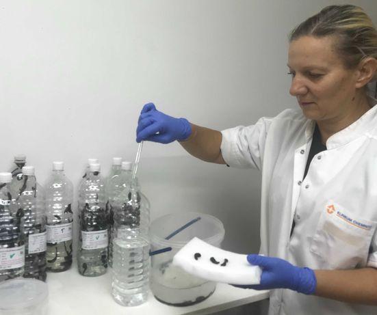 Биофабрика пиявки .Доставка по всей Украине