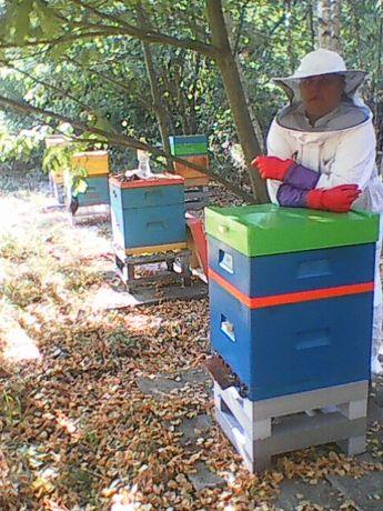 Pszczoły rodziny pszczele krainka dadant