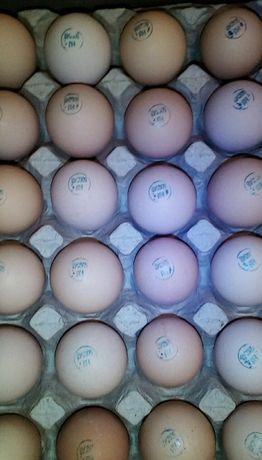 Бройлер, яйцо для инкубации.