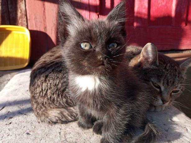 Кошечка 2 мес. ищет дом и любящих хозяев.
