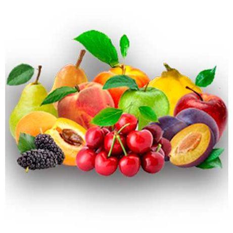 Продам саженцы плодовых деревьев разных сортов. Предзаказ на осень.