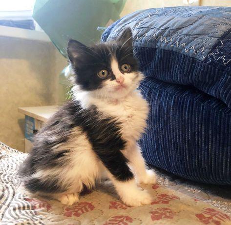 Майкл 1,5м. черно-белый котенок, пушистый (котики)
