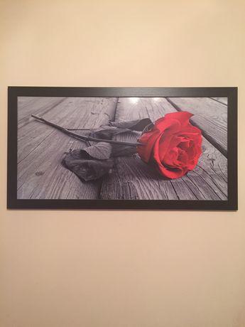 Obraz róża