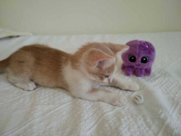 Dou gatinho lindo e fofinho