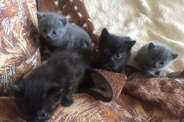Котята 2-ва мальчика и две девочки