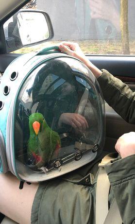 Plecak dla papugi. Transporter papug.