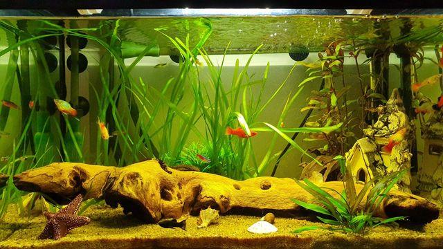 Trawa akwariowa - nurzaniec srubowy
