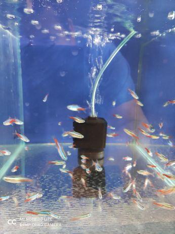 Szukasz ładne, zdrowe rybki? Zapraszamy.