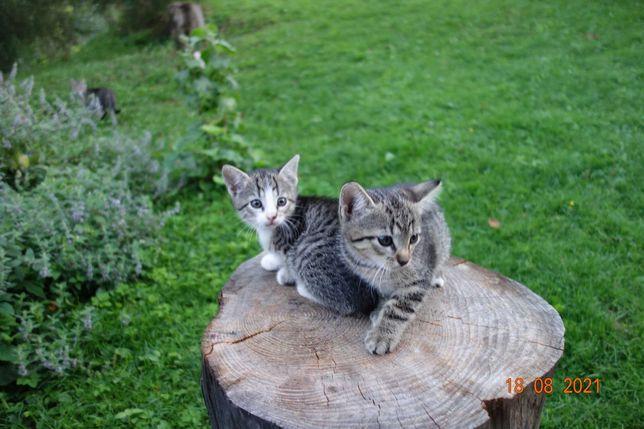 kotki, koty małe,