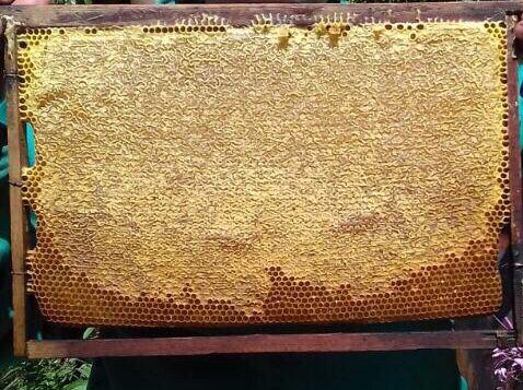 Мед цветочный с домашней пасеки