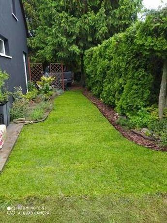 Trawnik, trawa z rolki, usługi ogrodnicze