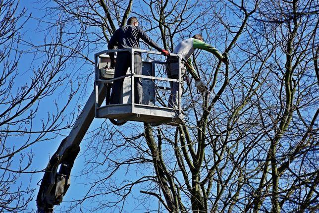 Wycinka pielęgnacja drzew rębak karczowanie koszenie podnośnik 26m