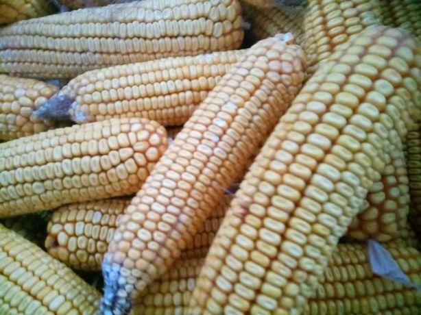 Кукуруза в качанах