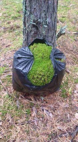 Лесной мох, зелёный,сизый  в любом количестве
