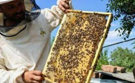 Продаються бджоли