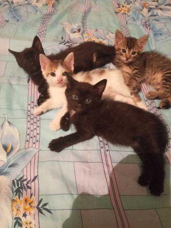 Котятам нужны дом и семья