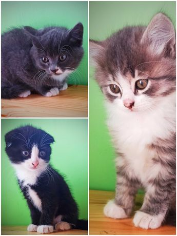 Пушистое счастье/ добрый милые котята