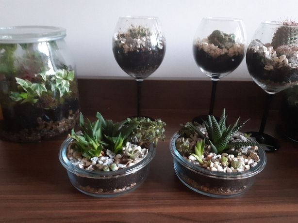 sukulenty w szkle, dekoracja roślinna