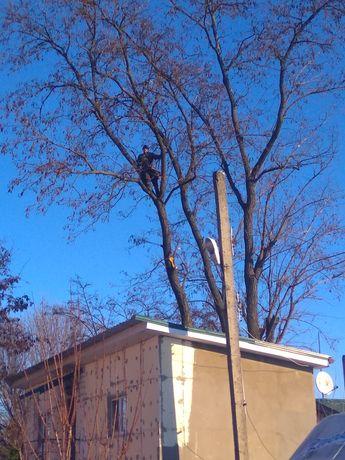 Валка (спил) и обрезка деревьев любой сложности. Валка аварійних дерев