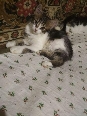 Отдам бесплатно котят,6 месяцев.