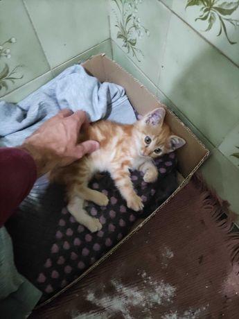 Gato resgatado para adoção responsável