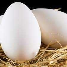 Инкубационное яйцо утиное Стар 53
