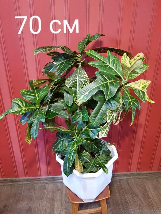 Комнатные растения! Цветы Кулиничи - изображение 1
