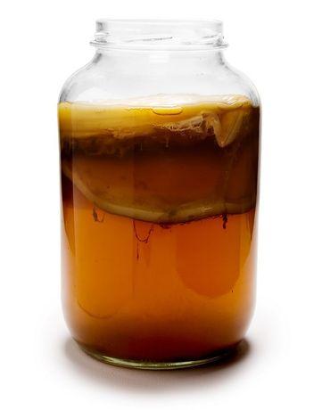 Kombucha grzyb herbaciany