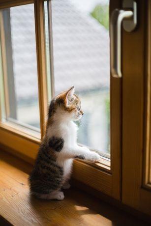 Регулювання Ремонт вікон та дверей (всі), збереження тепла