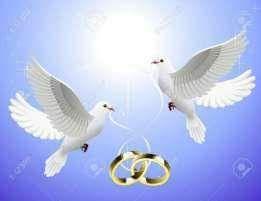 Gołębie białe