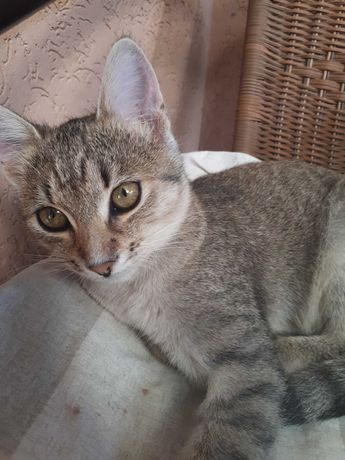 Котик(6 місяців)