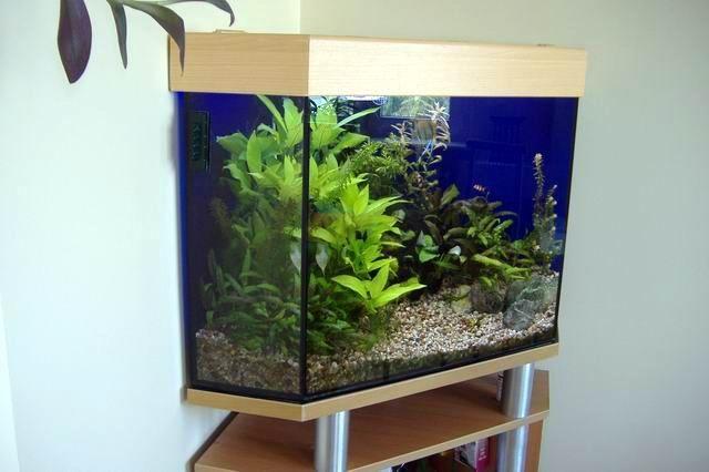 Akwarium narożne 140 litrów z wyposażeniem i szafką .