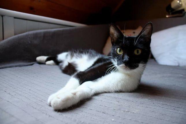 Kaja ok.3 letnia wysterylizowana kotka szuka kochającego domku.