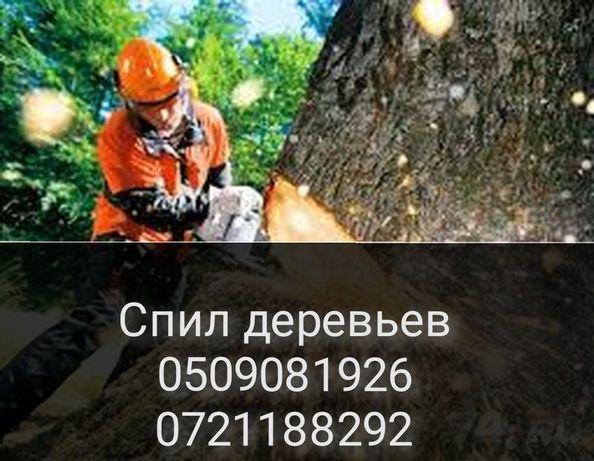 Спил деревьв