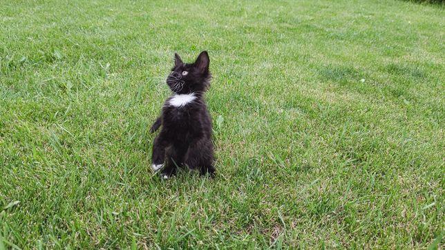 Котята, Котики, черный котик,  ищут своих хозяев