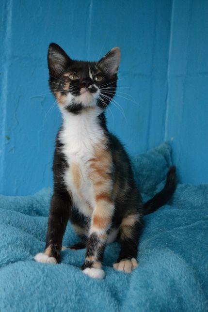 харизматичне кошенятко дівчинка 6м