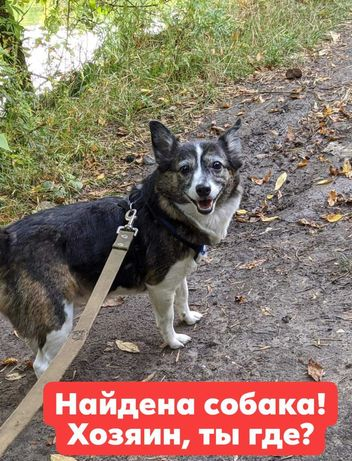 Найдена собачка!