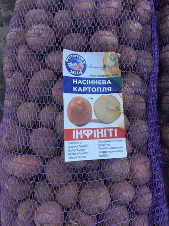 Картофель посадочный сорт: Орла ,Маверик ,Инфинити