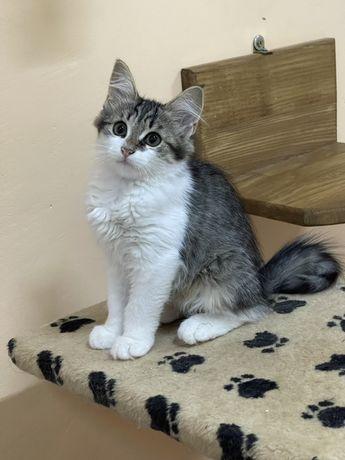 Кошечка котенок