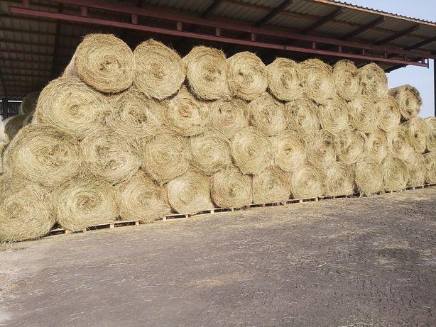 Sprzedam siano zielone bez deszczu składowane pod dachem