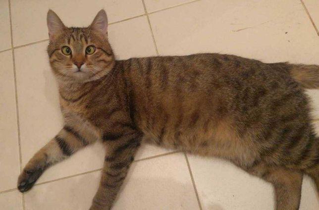 Особенный котик ищет дом