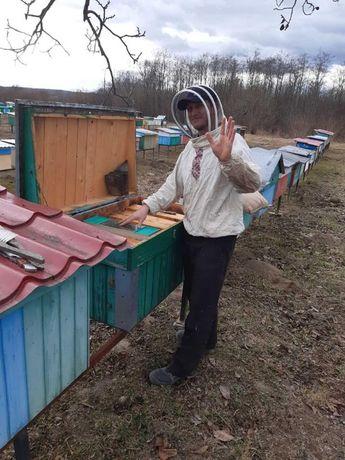Пчелопакеты от производителя