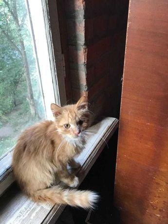 Руде кошеня, 5-6 місяців шукає господаря, котенок рыжий
