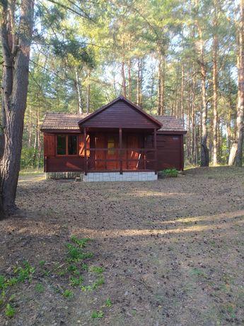 Działka Przybynow wraz z domkiem letniskowym